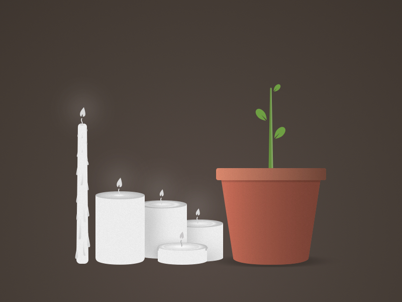 Candles and Plant