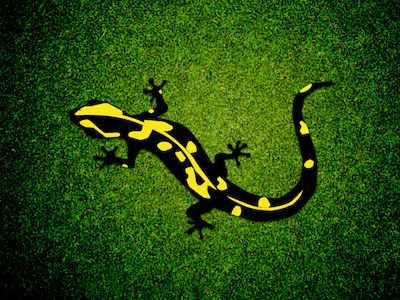 Fire Salamander Illustration